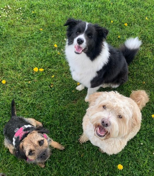 pet finchley dogs sitting