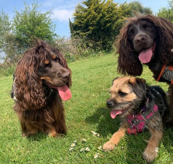 pet finchley dogs