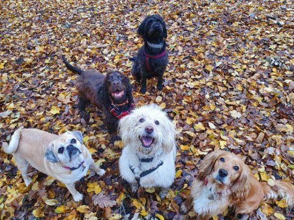 Dog walking group