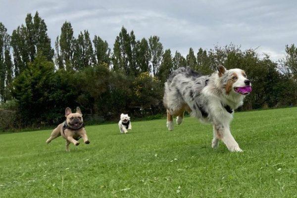 dogs having fun running
